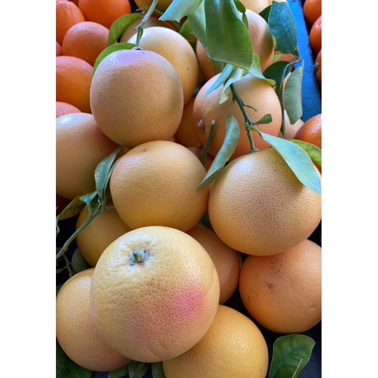 Pomelos de Berre (1kg)