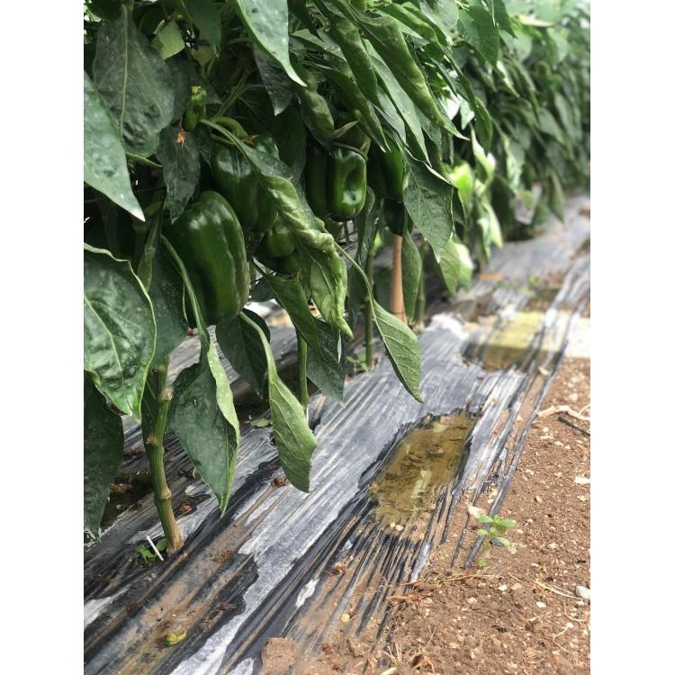 Poivron Vert (1kg)