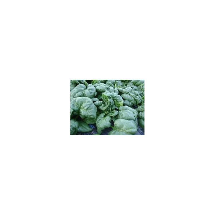 Épinard (1kg)